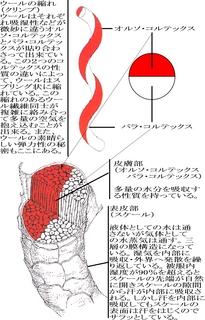 ウール繊維の構造.jpg